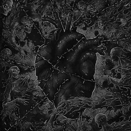 HORNA/ PURE split 12
